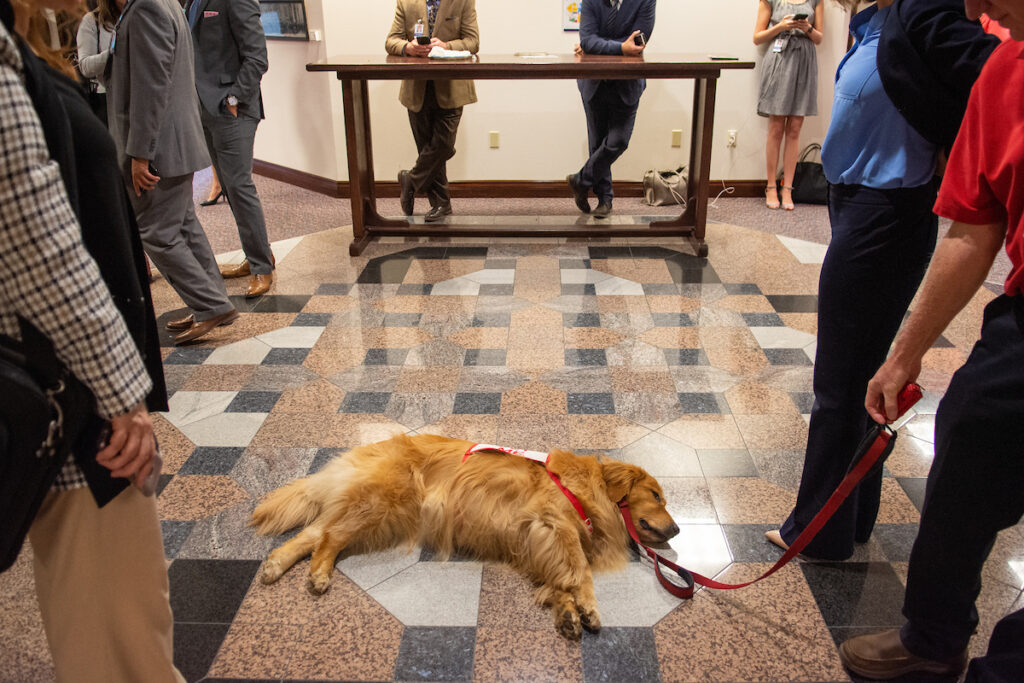 Therapy dog at Legislature