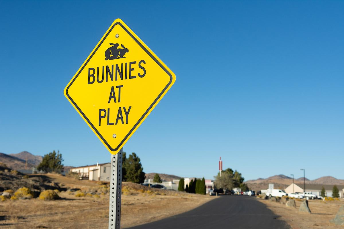 Bunnies at play sign