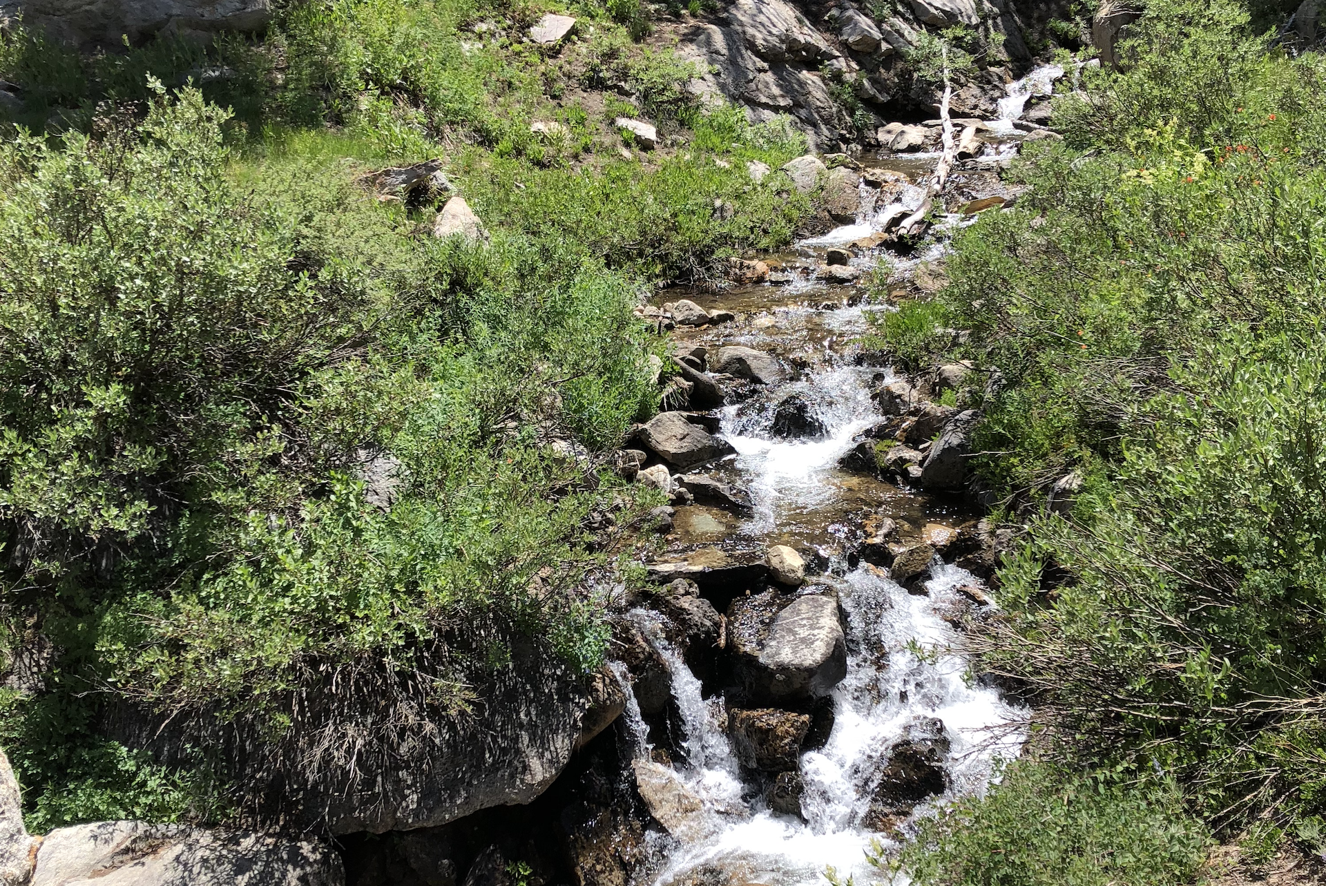 Stream in the Ruby Mountains