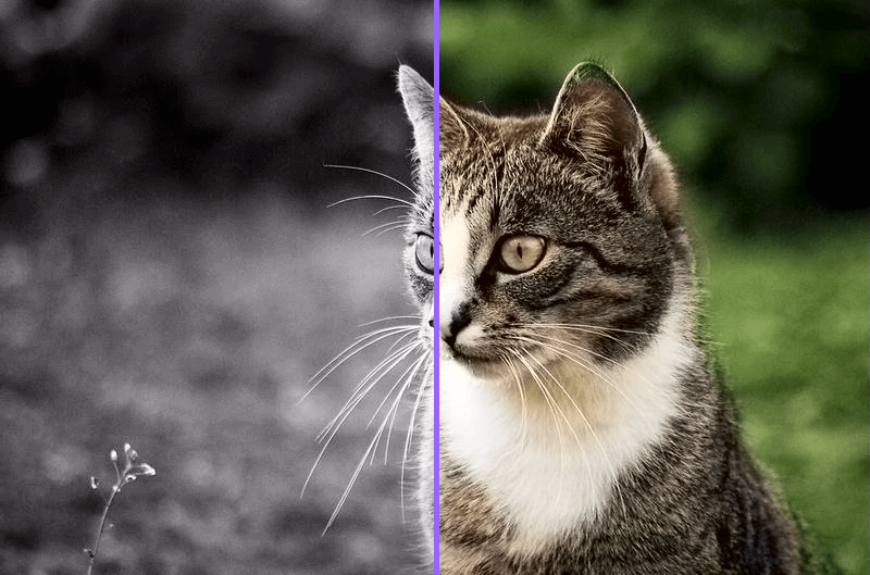 rendered-comparison (1)