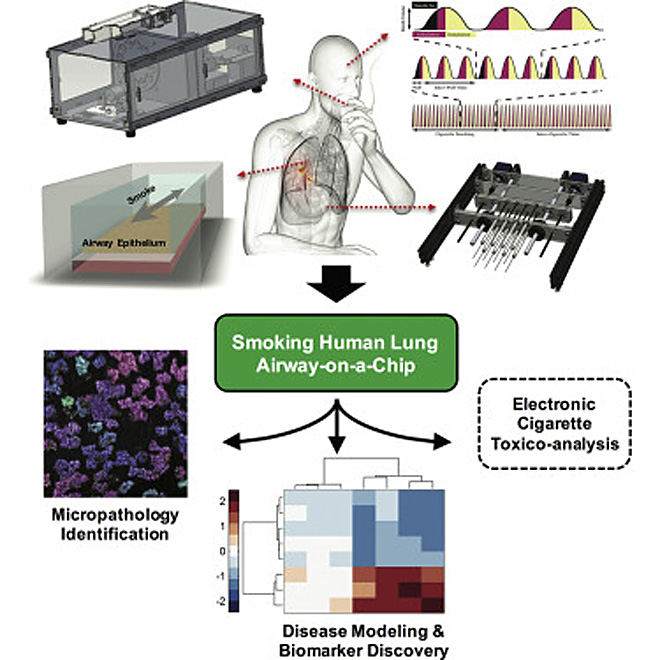 lung-on-a-chip-cigarette-smoking-wyss-institute-6