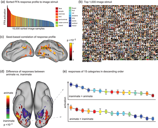 Mind-Reading AI Can Reconstruct Videos Using Your Brain