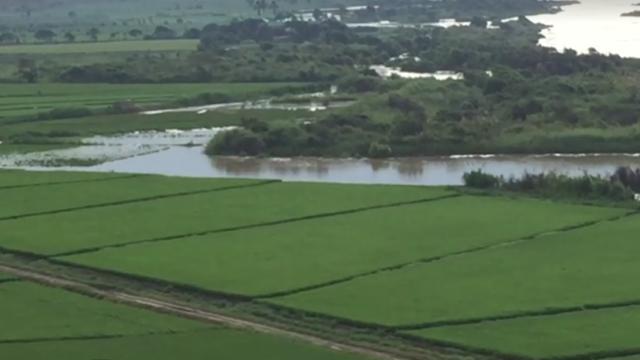 Danios Rio Jequetepeque Agricultura 4