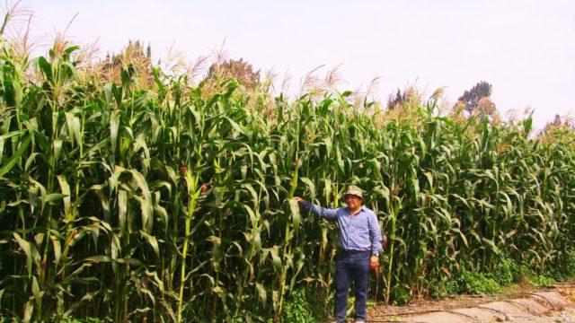 Agricultura 4