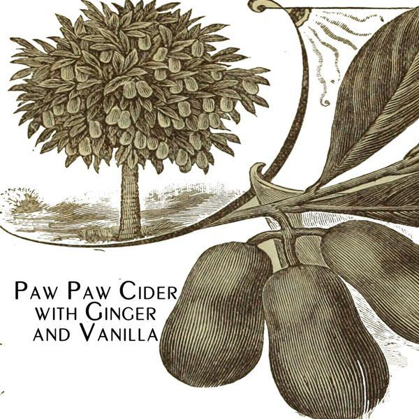 2019 Paw Paw Cider with Ginger and Vanilla