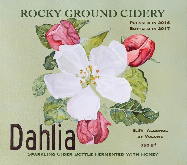 Product Image for 2016 Dahlia, Sparkling