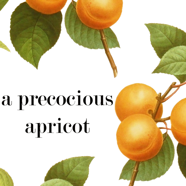 Product Image for 2019 A Precocious Apricot