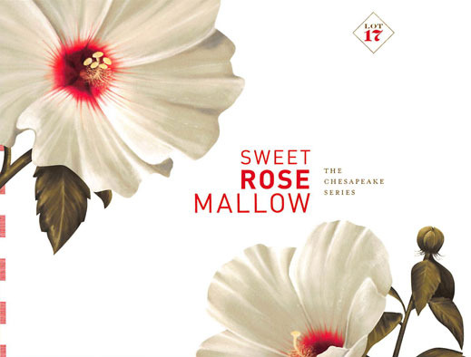 Sweet Rose Mallow