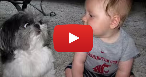 dog and cat meet baby bop