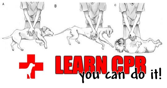 Learn How To Perform CPR For Dogs And Cats