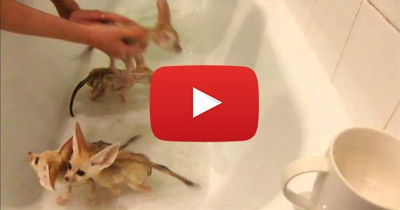 Baby Hermit Crab Food