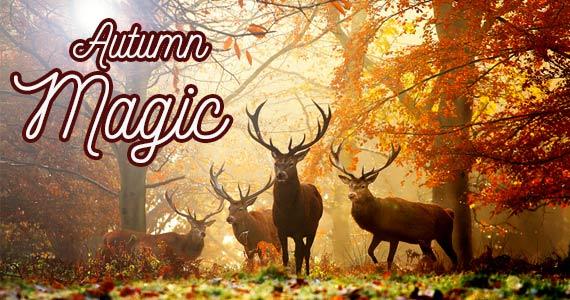 Animals Enjoying Autumn Magic