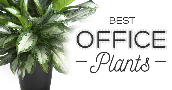 Best Low Maintenance Plants for Your Office