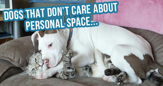 10 Dogs That Don't Care About Personal Space