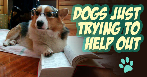 10 Hilarious Dogs Just Trying To Help Out