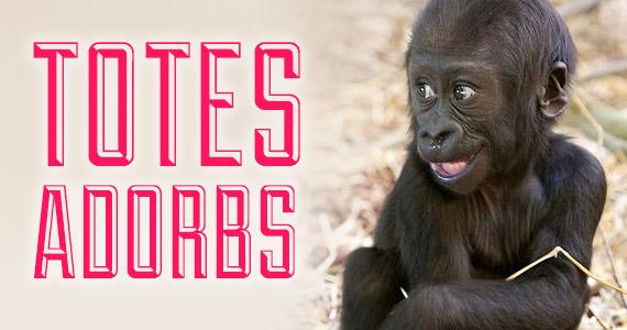 10 Totes Adorbs Animal Babes