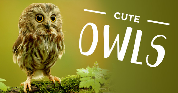 13 Times Owls Stole Your Heart