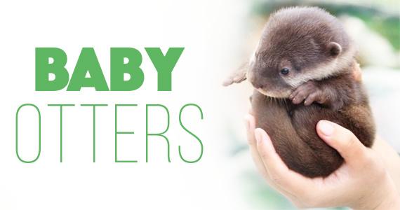 Baby Otters Visit ABC15 Studio