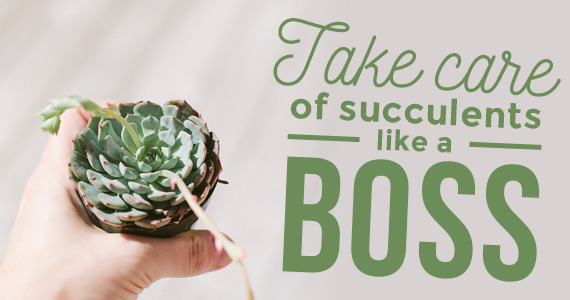 How To Take Care of Succulents Like a Boss