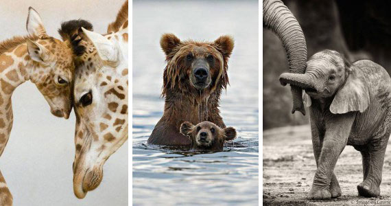 Photos Of Animals And Their Parents That Will Melt Your Heart