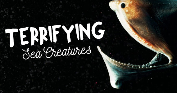 Terrifying Sea Creatures You Didn't Know Exist
