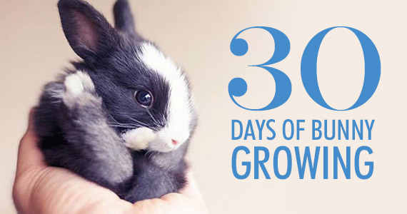 Watch This Bunny Grow Right Before Your Eyes