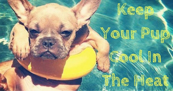 Tips For Keeping Your Dog Cool In The Summer