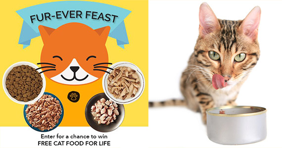 Win Cat Food For Life
