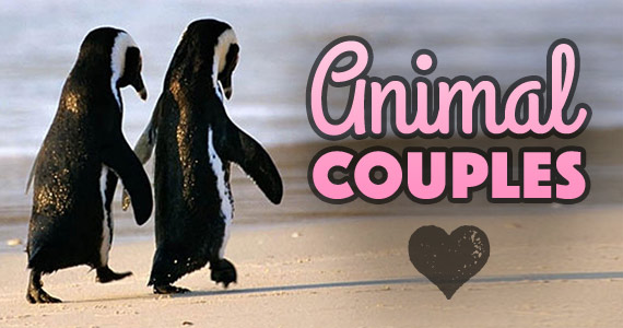 Cutest Animal Couples Celebrate Valentine's Day