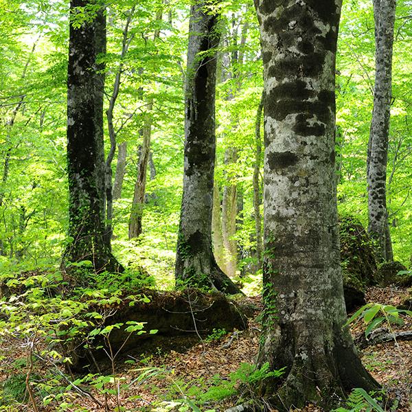 Dakedaibuna Natural Forest