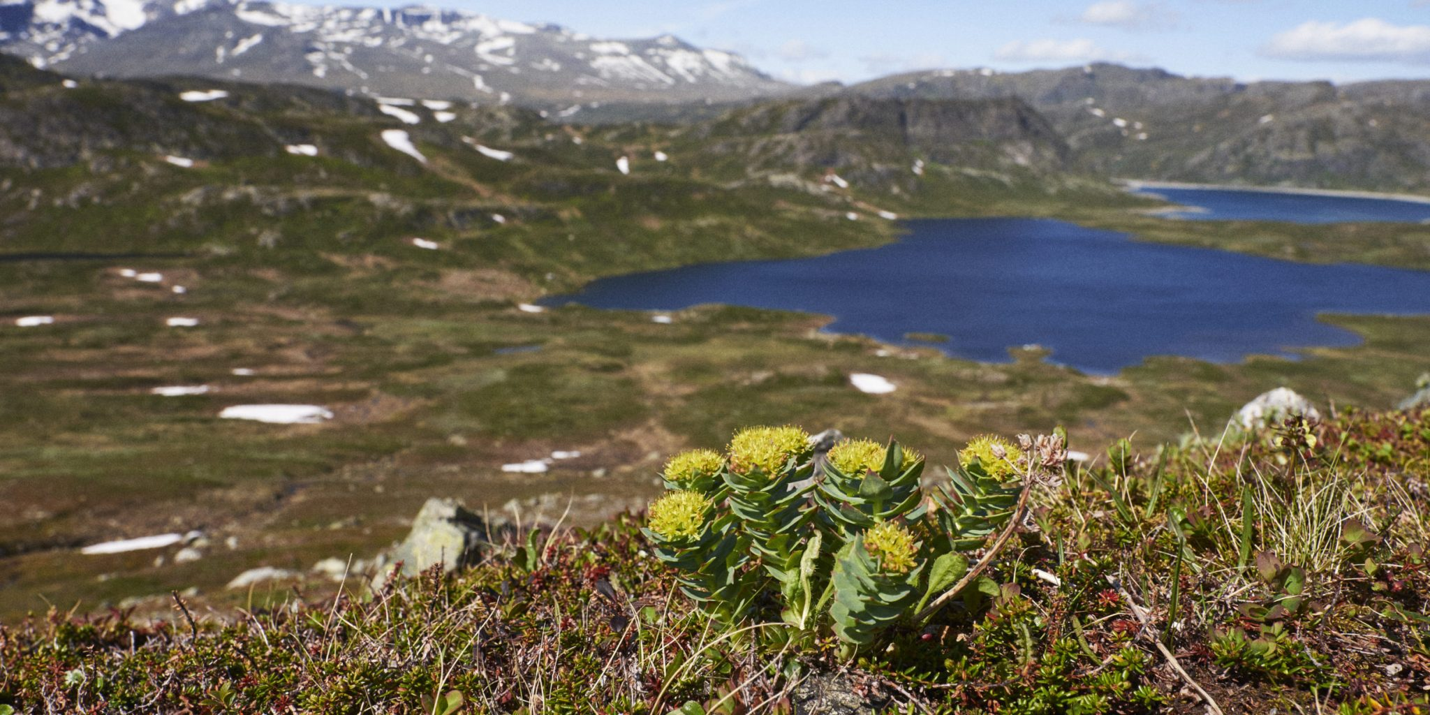 2019.06-Jotunheimen-BitihornOgSkyrifjellet-By Petter Olsen – MoN (28)