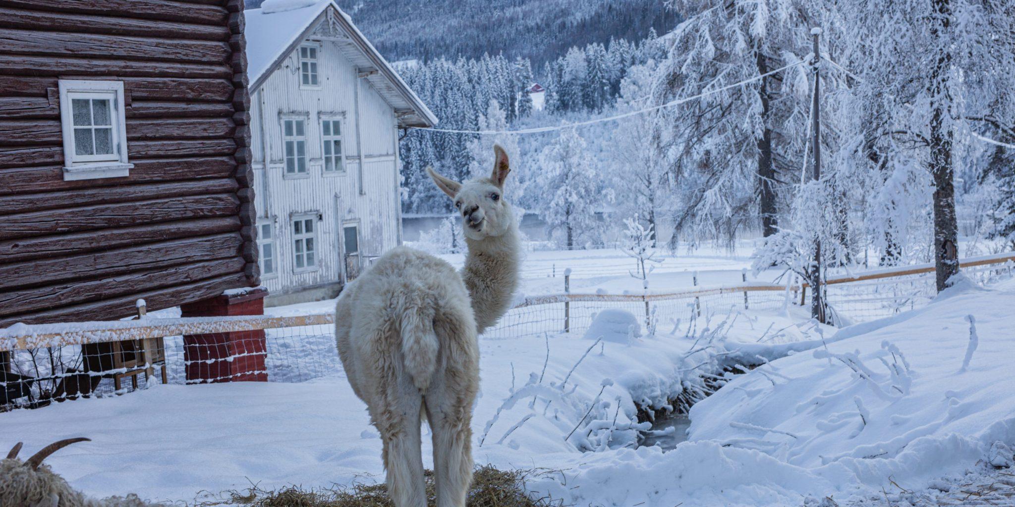Piltingsrud Gård – Winter – Siri Berntsen (13)