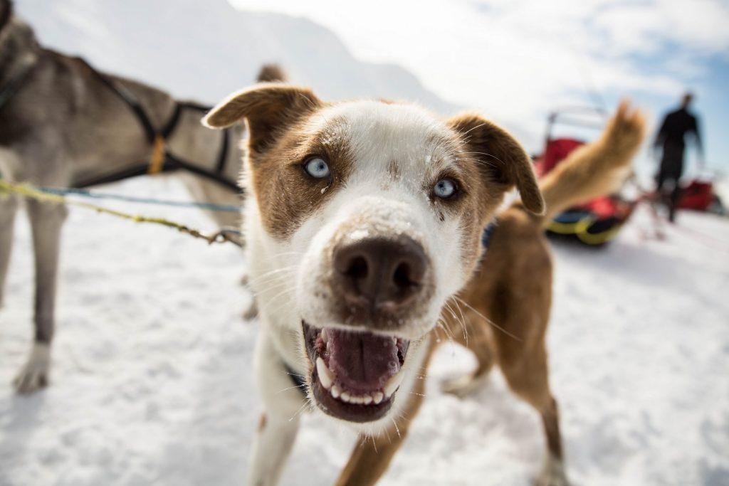 Dogsledding – Jotunheimen Travel © Kjell Erik Reinhardtsen