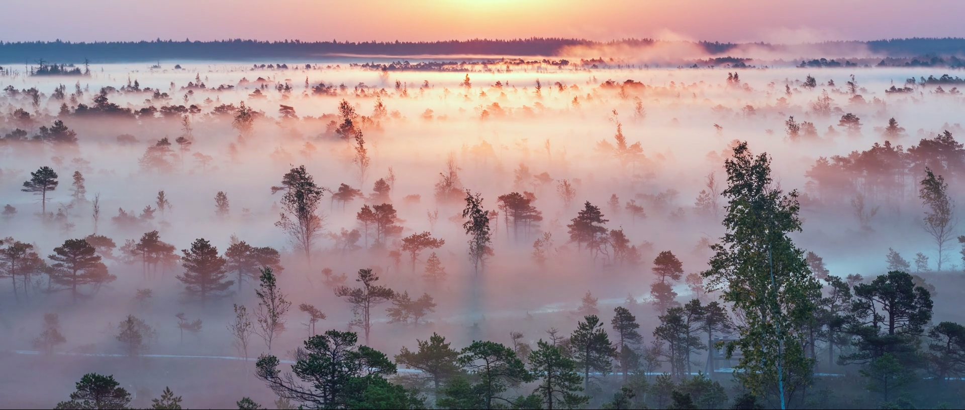 Morning in Moorland. Video about Ķemeri National Park in Latvia