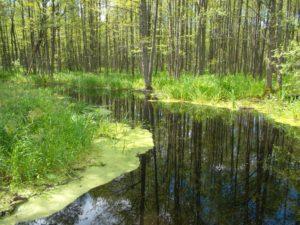 Dabas taka pie Slokas ezera Ķemeru nacionālajā parkā