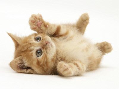 Kaķēna attēls