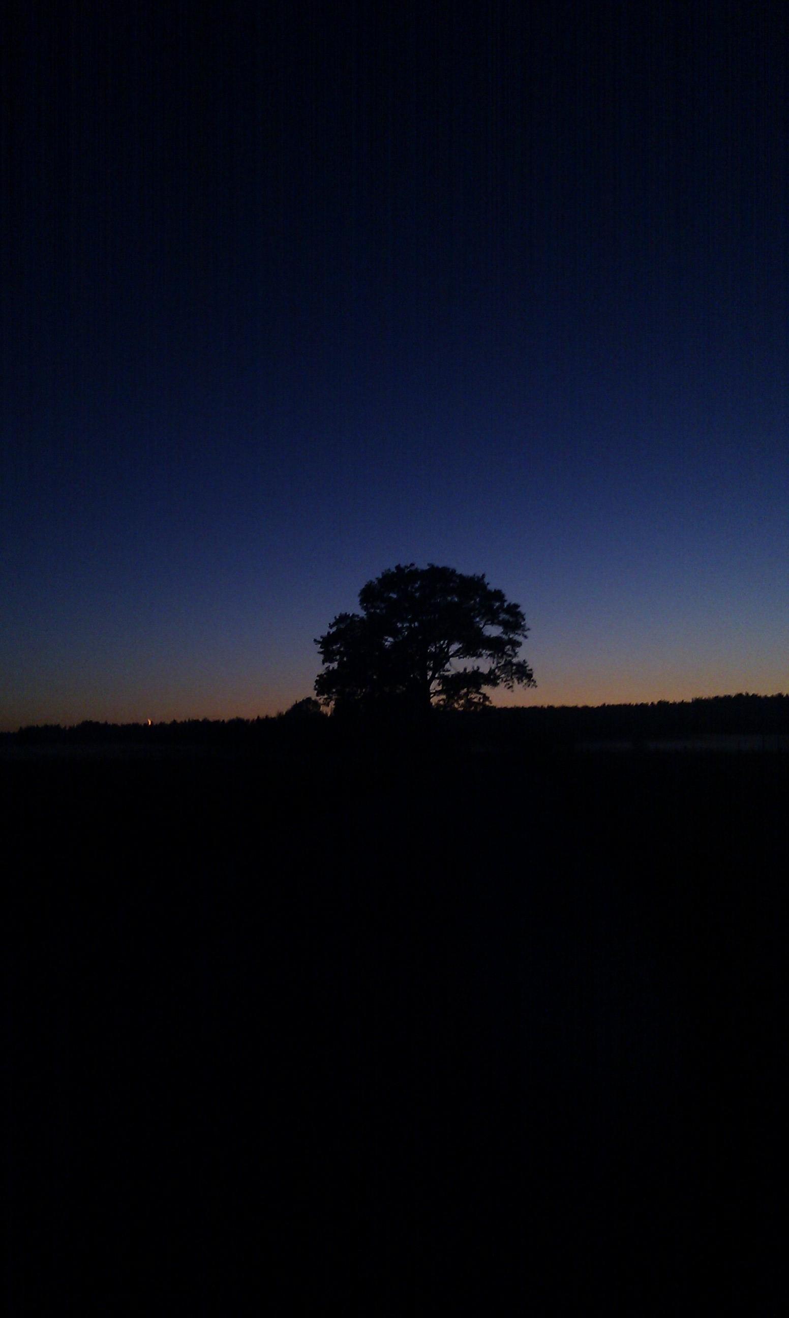 Koks naktī pļavas vidū, ceļa malā.