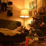 Ziemassvētki 2016 Vejlē, Dānijā