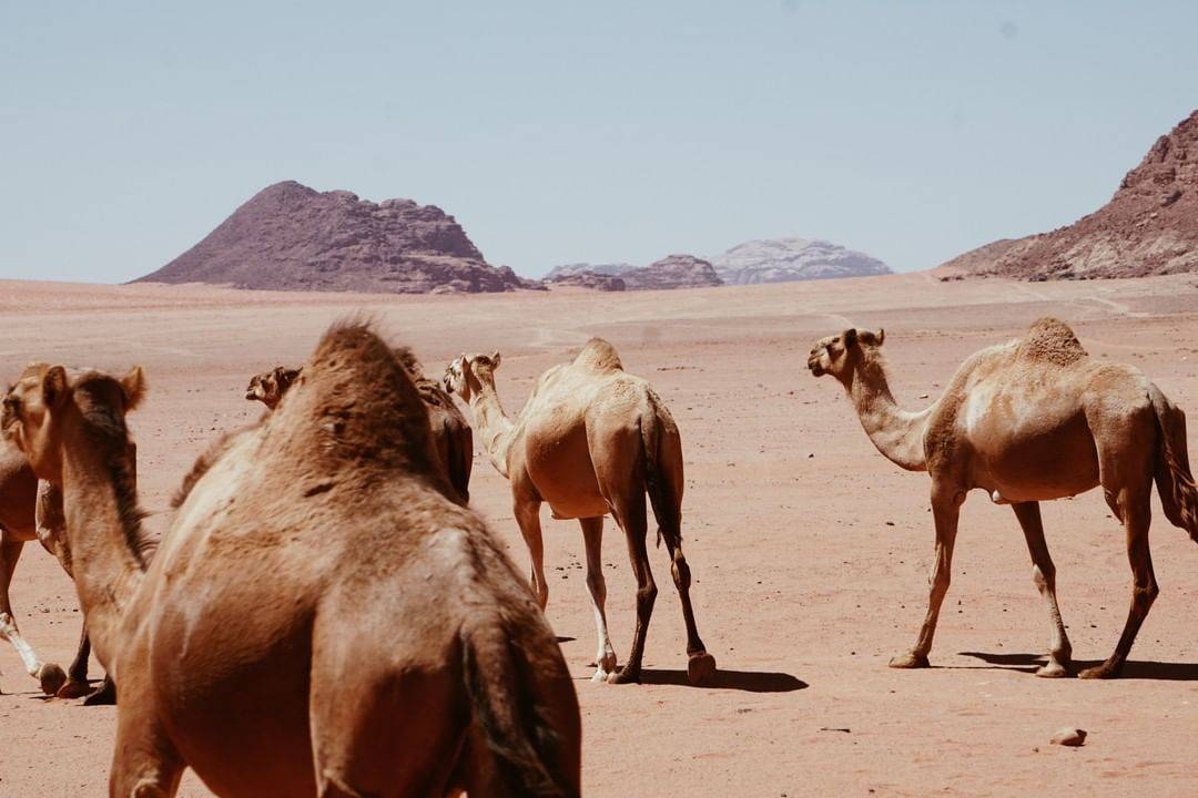 Wadi Rum Experience From Petra (1 Day)