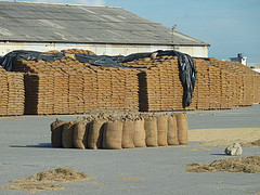 Open grain storage in India