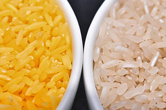 Golden Rice grain