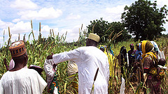 Farmers' field day conducted in Gambawa village, Nigeria