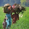 Women heading home with firewood at the end of the day's work, in Bihar, India (Photo: Vinaynath Reddy, ViDocs)