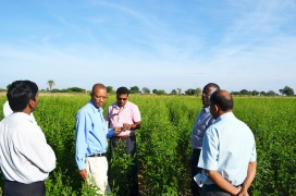 Drs E Monyo (2nd from left), S Kumar (Center) and C Ojiewo (2nd from right) inspecting a pigeonpea farm in Vasantapuram, Mahabubnagar district.