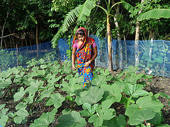 Gita in her Okra patchm Bangladesh. Photo by Sumana Sharmin 2014