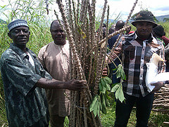 Farmers receive improved cassava variety at Godilogo