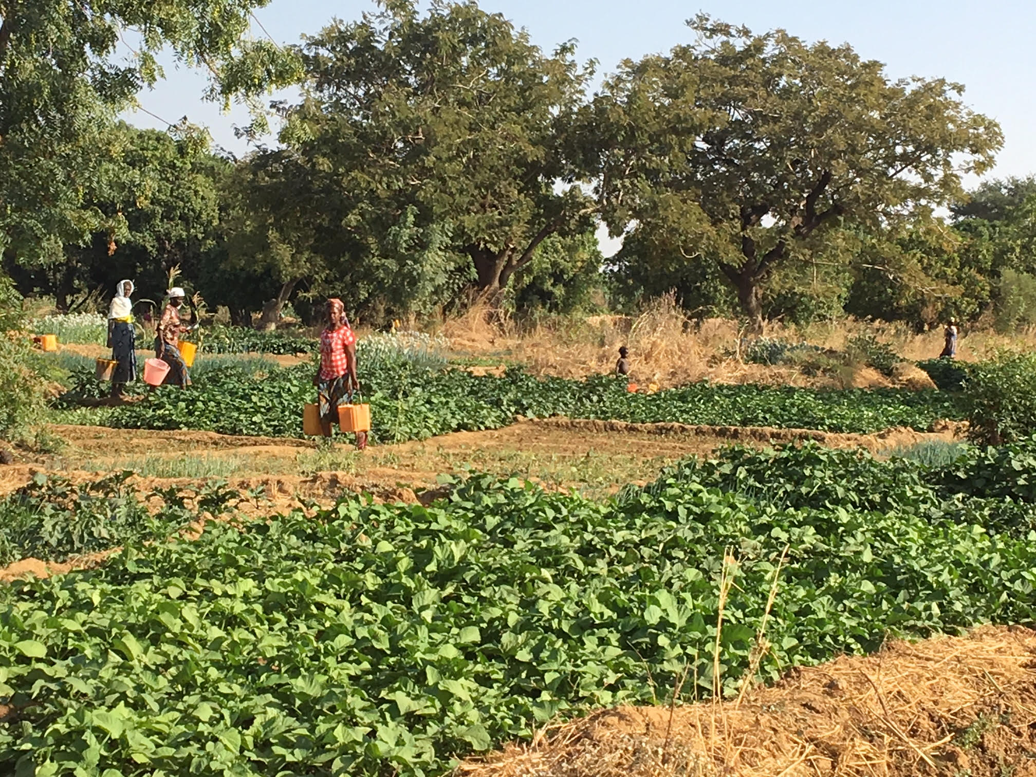 Institutional Change and Irrigation Managemente in Burkina Faso