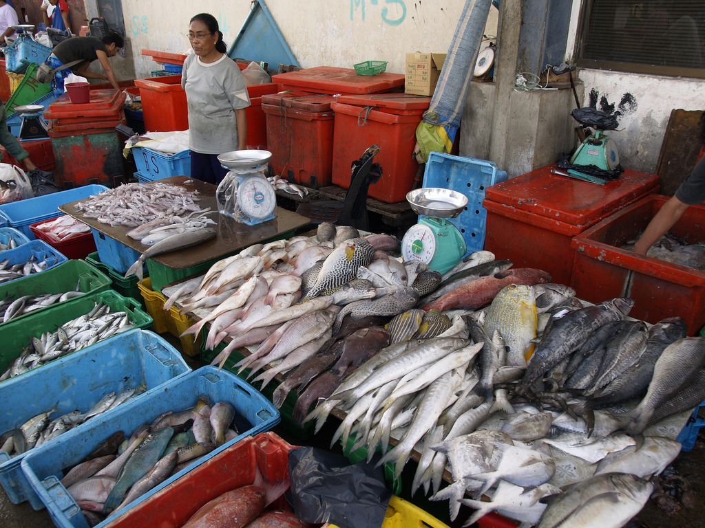 Fish market in Kota Kinabalu, Malaysia