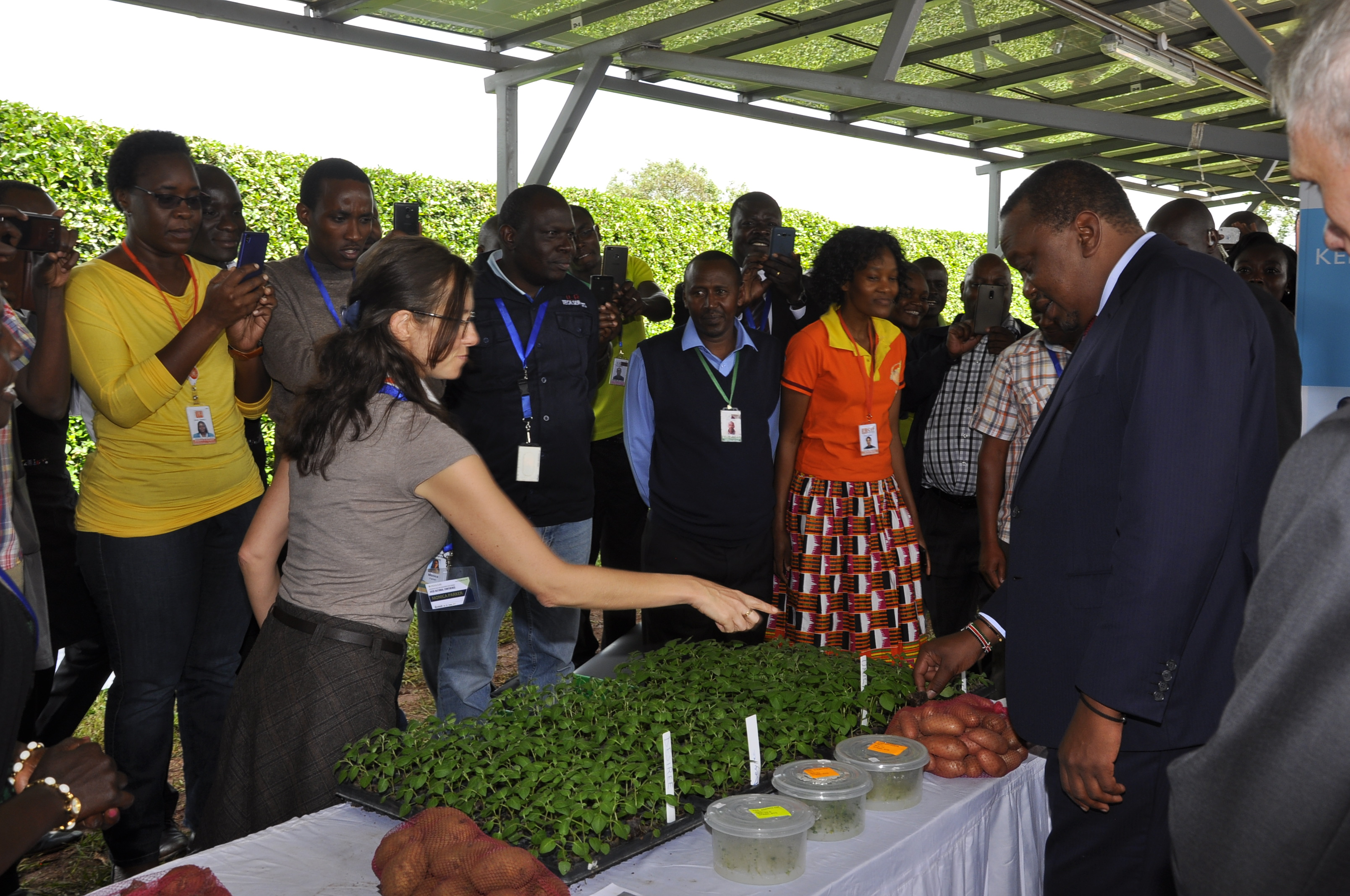President Uhuru Kenyatta learns about apical cuttings and how they complement the potato seed system from CIP scientist Monica Parker.