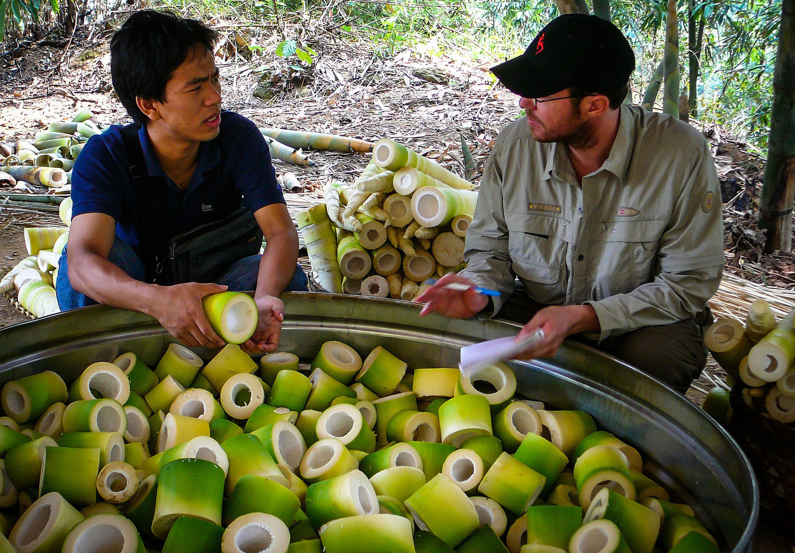 Freshly harvested sections of bamboo shoots in the pot ready to be steamed, before being fermented and dried.